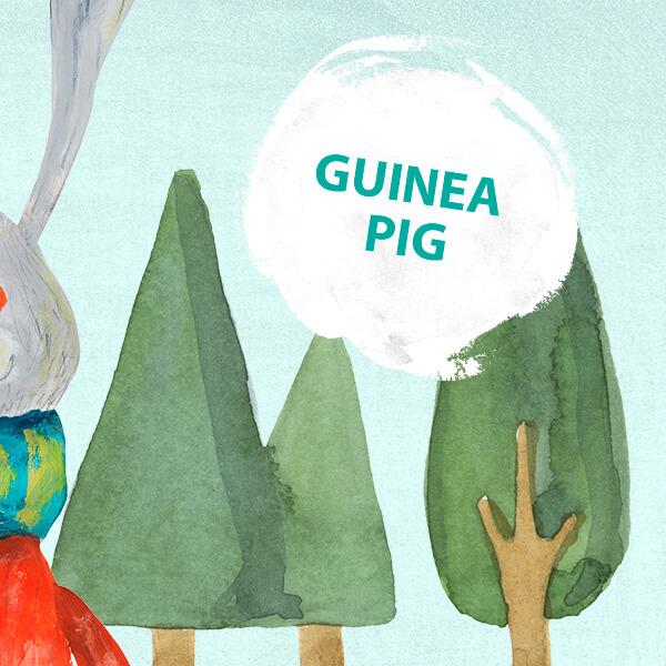 Guinea pig morské prasiatko fráza týždňa jazyková škola Best English Bratislava
